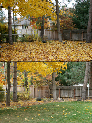 Our backyard: before and after